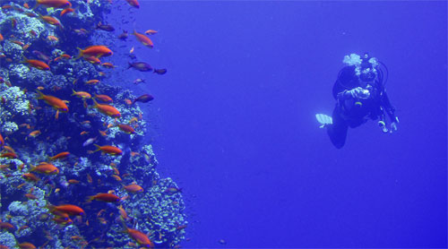 Trident diver in the Red Sea